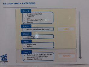 Les grandes étapes de réalisation d'une analyse génétique au laboratoire