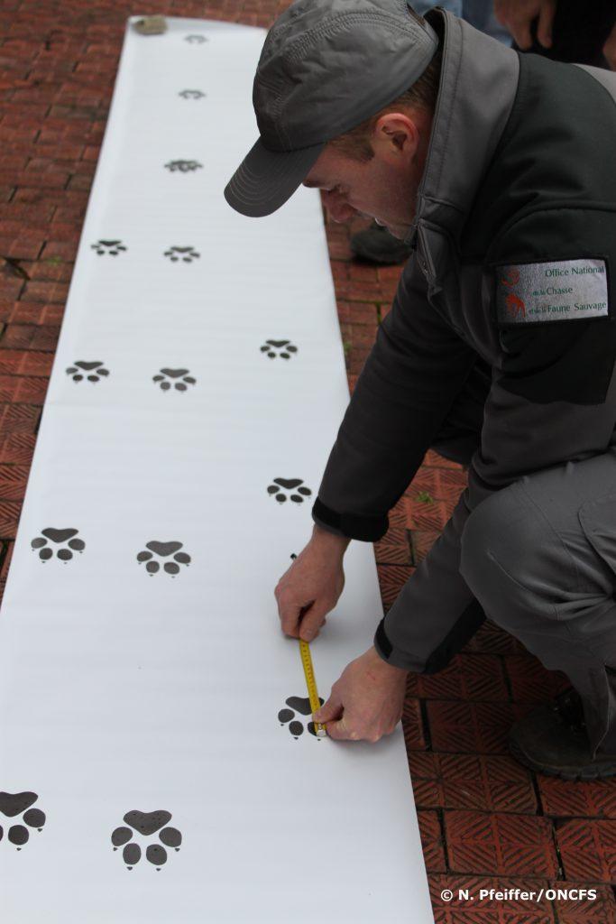Formation de correspondants Réseau Loup-Lynx.