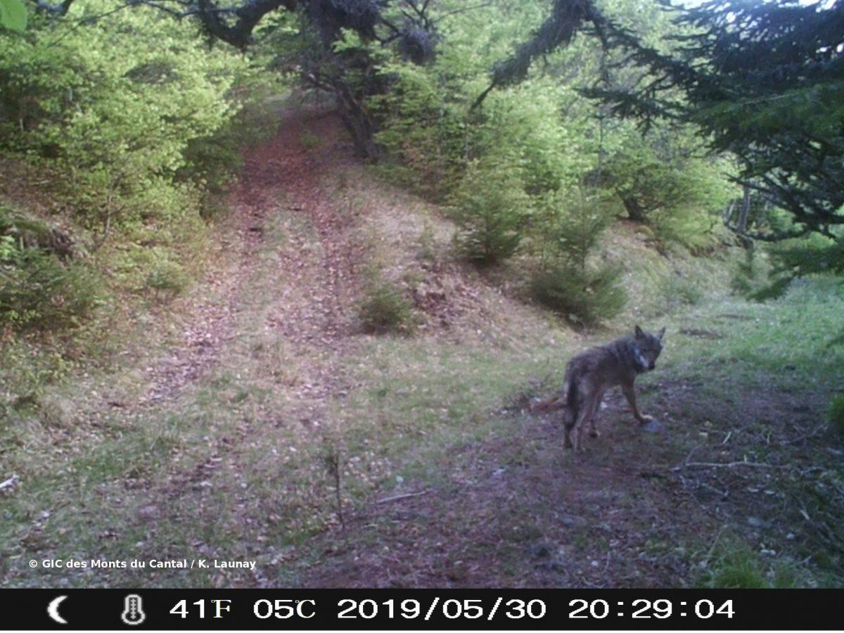 Monts du Cantal : une nouvelle Zone de Présence Permanente