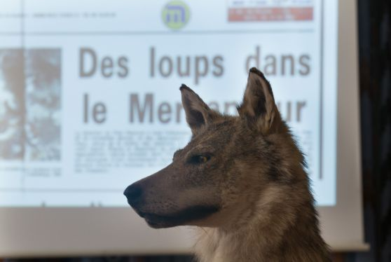 Stage de formation du réseau Loup, en Isère