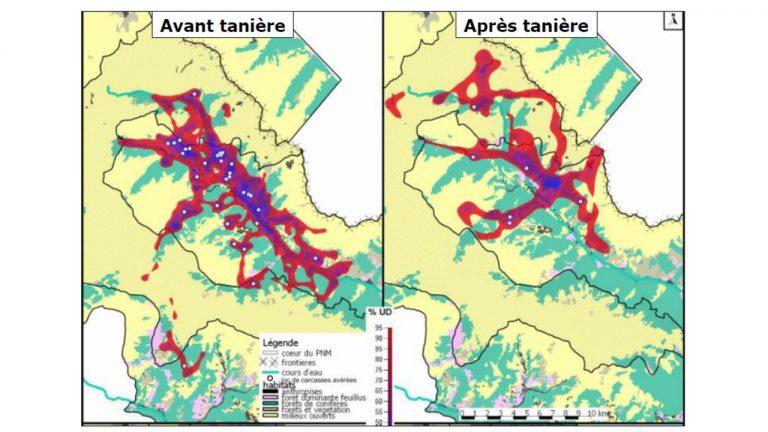 """Carte d'utilisation de l'espace d'une des louves reproductrices suivies par collier GPS/GSM: """"effet tanière"""" visible lié au moindre déplacement pendant la phase d'élevage des jeunes"""