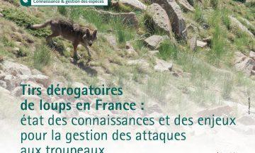 Tirs dérogatoires de loups en France :  état des connaissances et des enjeux pour la gestion des attaques aux troupeaux