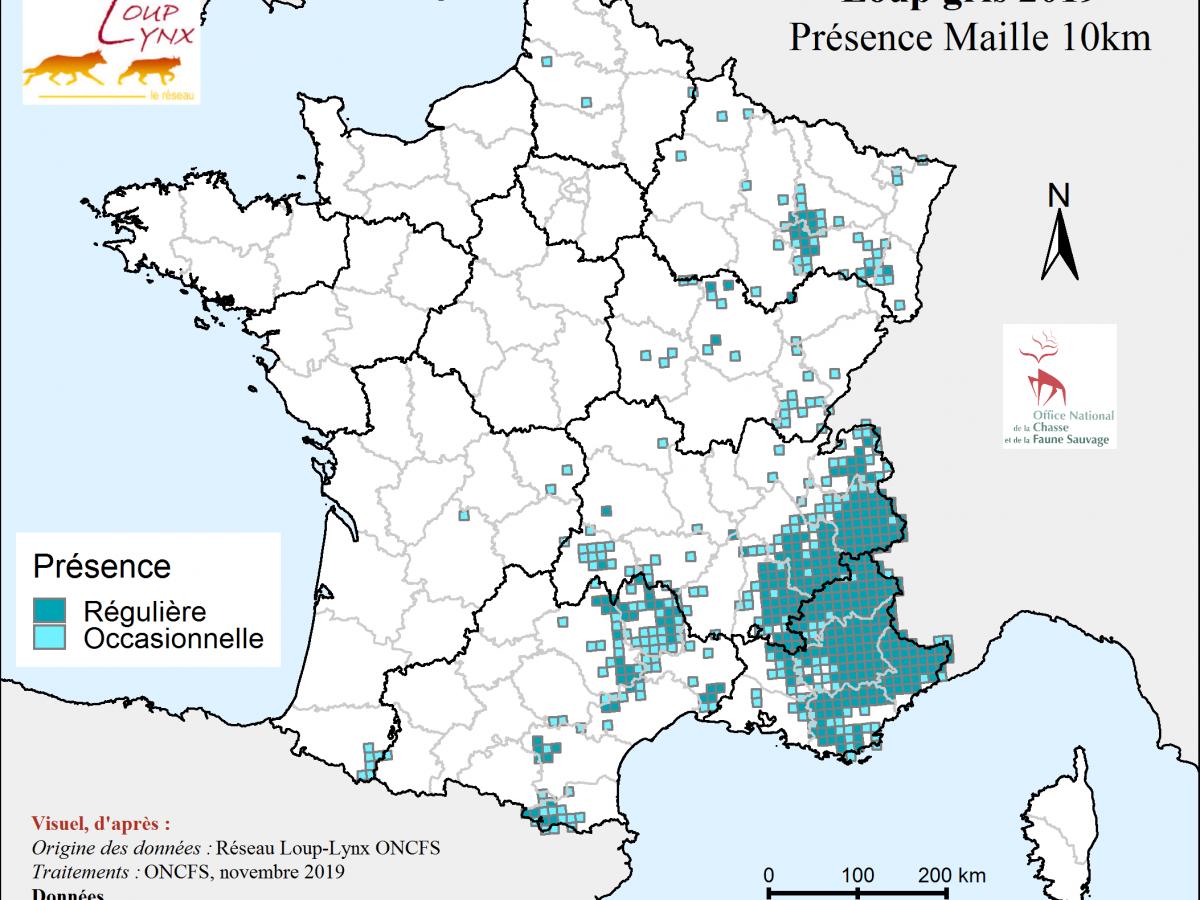 Bilan spatial de présence du loup en 2019 (France)