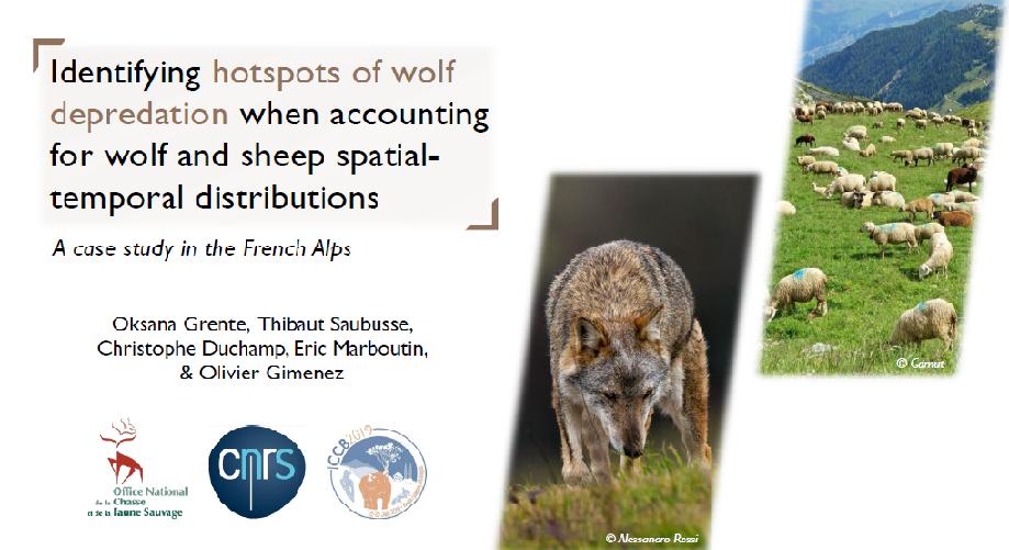 Entre Recherche et Gestion : Une nouvelle approche pour l'analyse des points chauds d'attaques de loup sur ovins en France