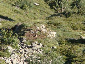 La meute sur le site de rendez-vous  © Réseau loup-lynx